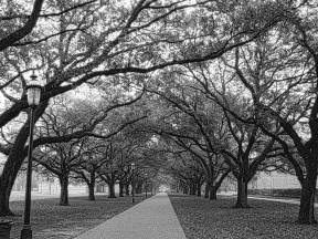 Path_at_Rice_University